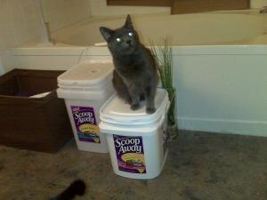 Super Cats love Scoop Away