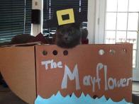 Nala in the Mayflower